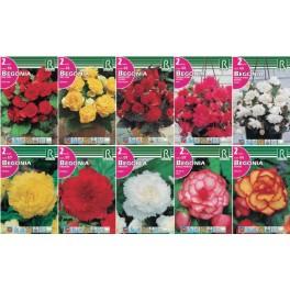 Bulbo Begonias y diversas cofre tipo BG