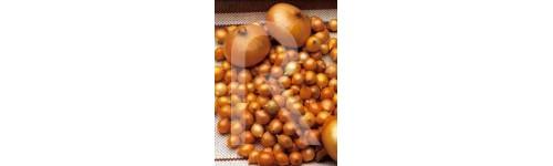 Cebollitas de plantacion, chalota y azafran